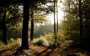 In-The-Forest